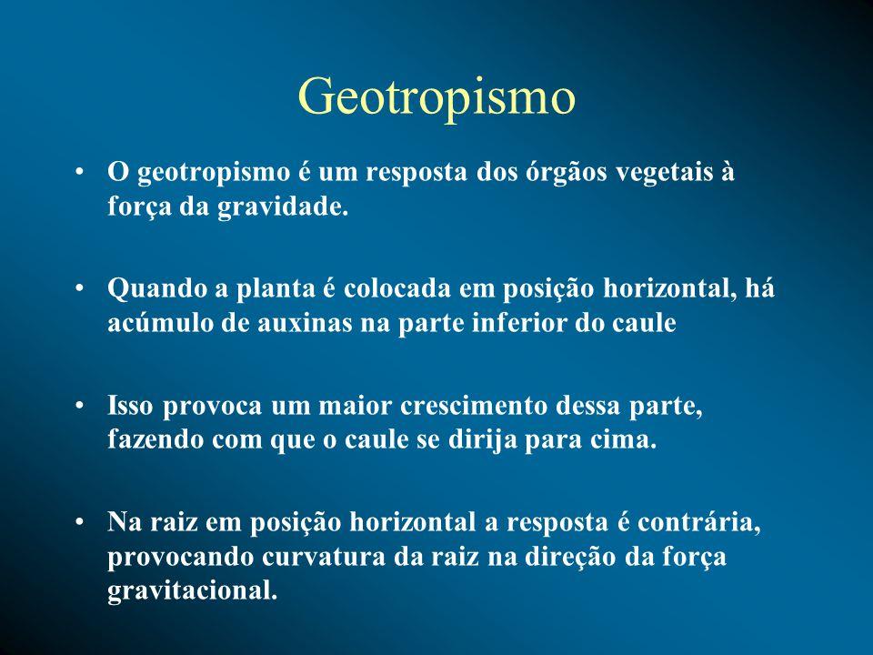 GeotropismoO geotropismo é um resposta dos órgãos vegetais à força da gravidade.