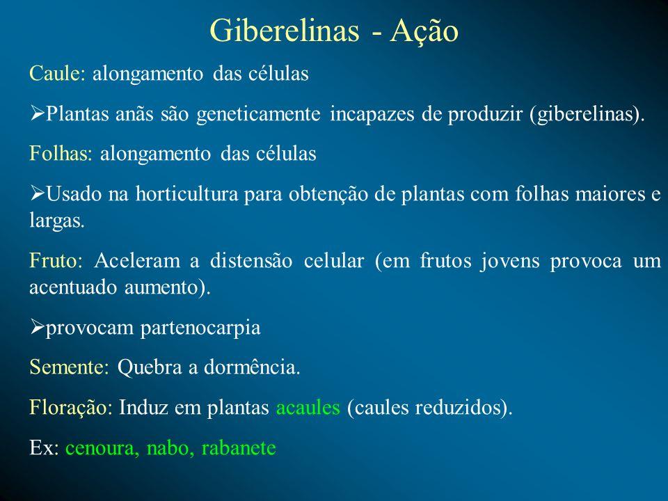 Giberelinas - Ação Caule: alongamento das células