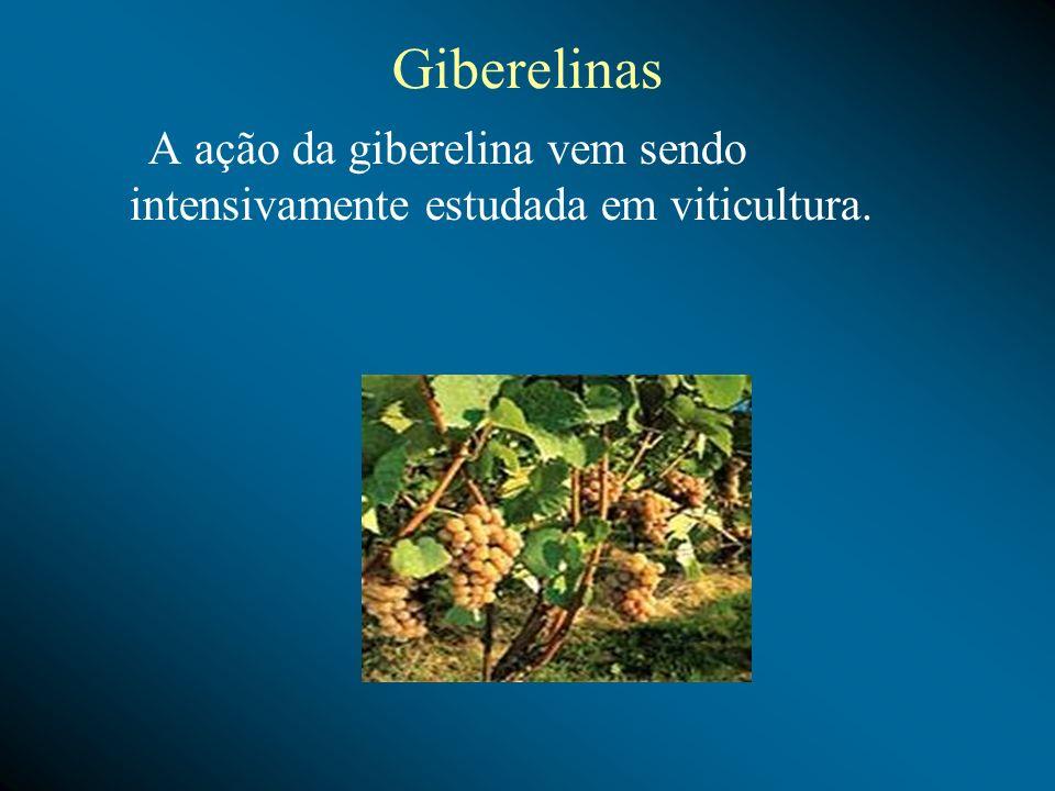 Giberelinas A ação da giberelina vem sendo intensivamente estudada em viticultura.