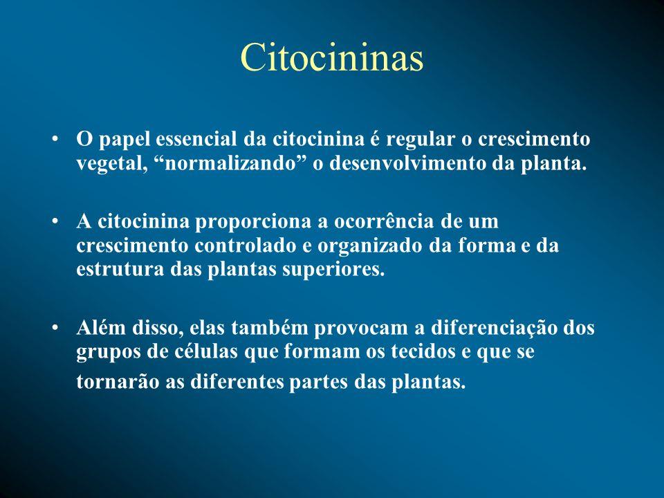 CitocininasO papel essencial da citocinina é regular o crescimento vegetal, normalizando o desenvolvimento da planta.