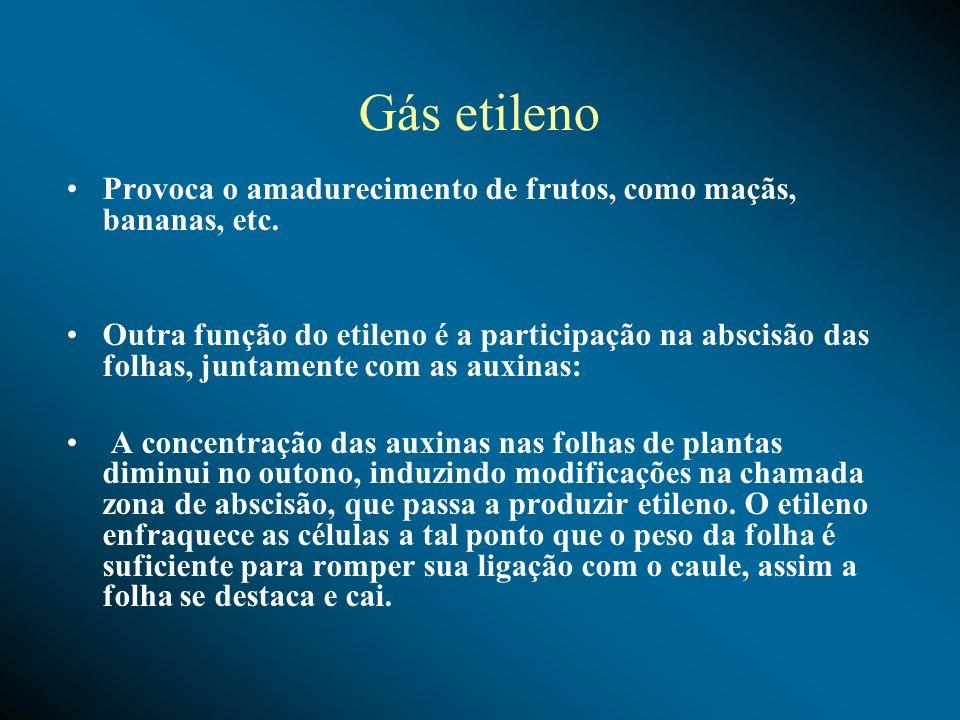 Gás etileno Provoca o amadurecimento de frutos, como maçãs, bananas, etc.