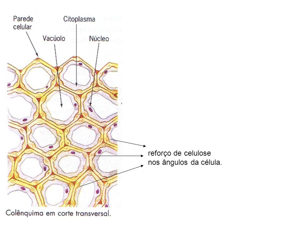 reforço de celulose nos ângulos da célula.