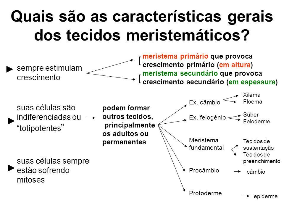 Quais são as características gerais dos tecidos meristemáticos