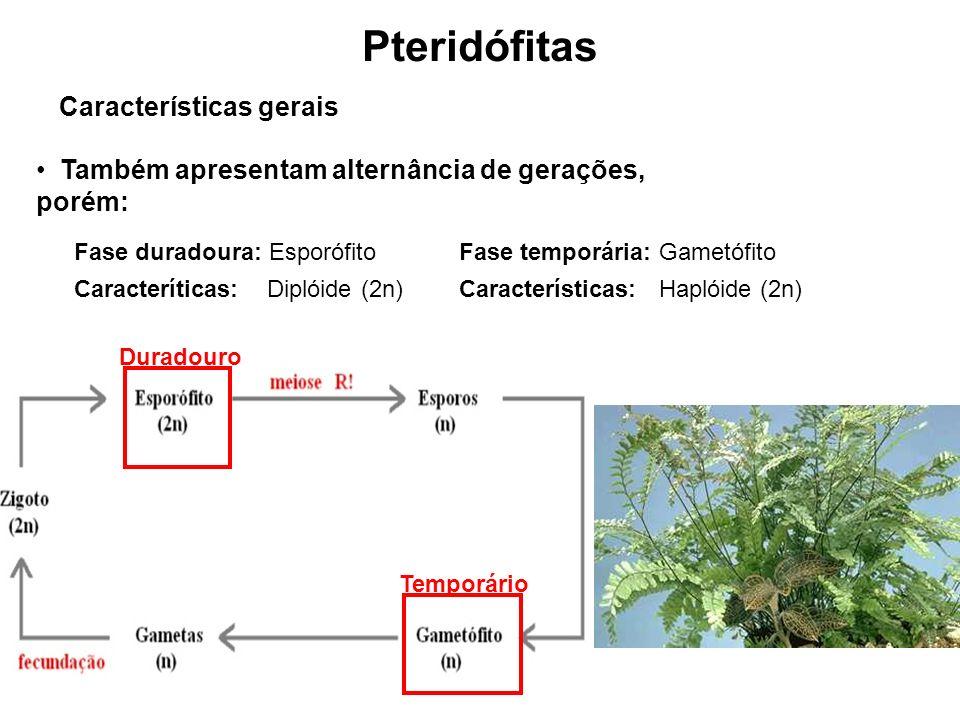 Pteridófitas Características gerais