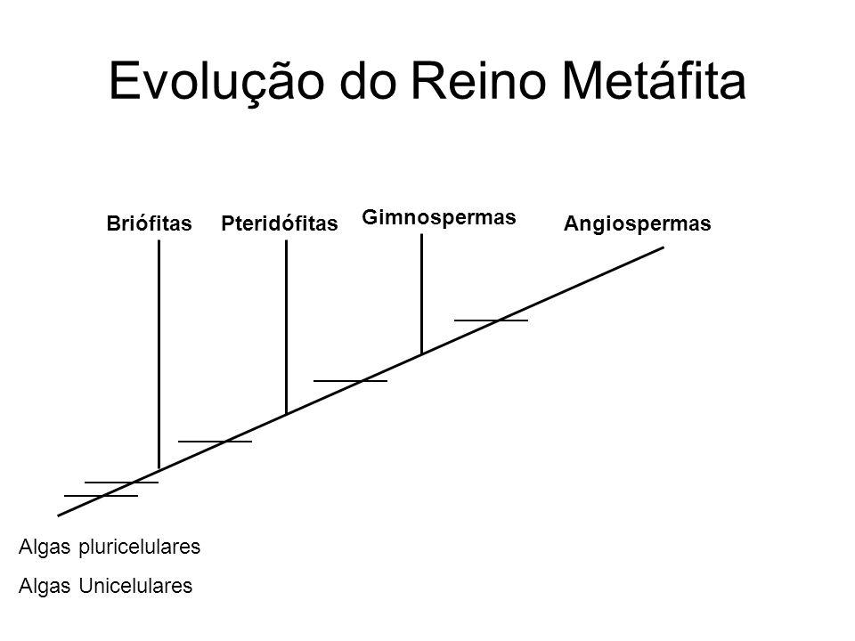 Evolução do Reino Metáfita