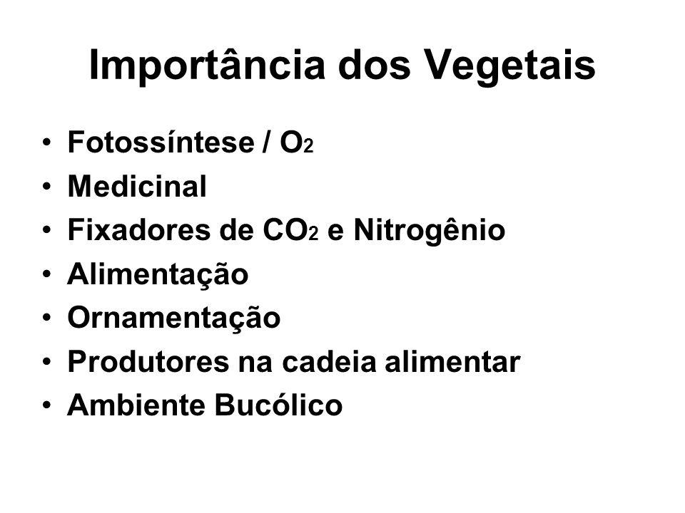 Importância dos Vegetais