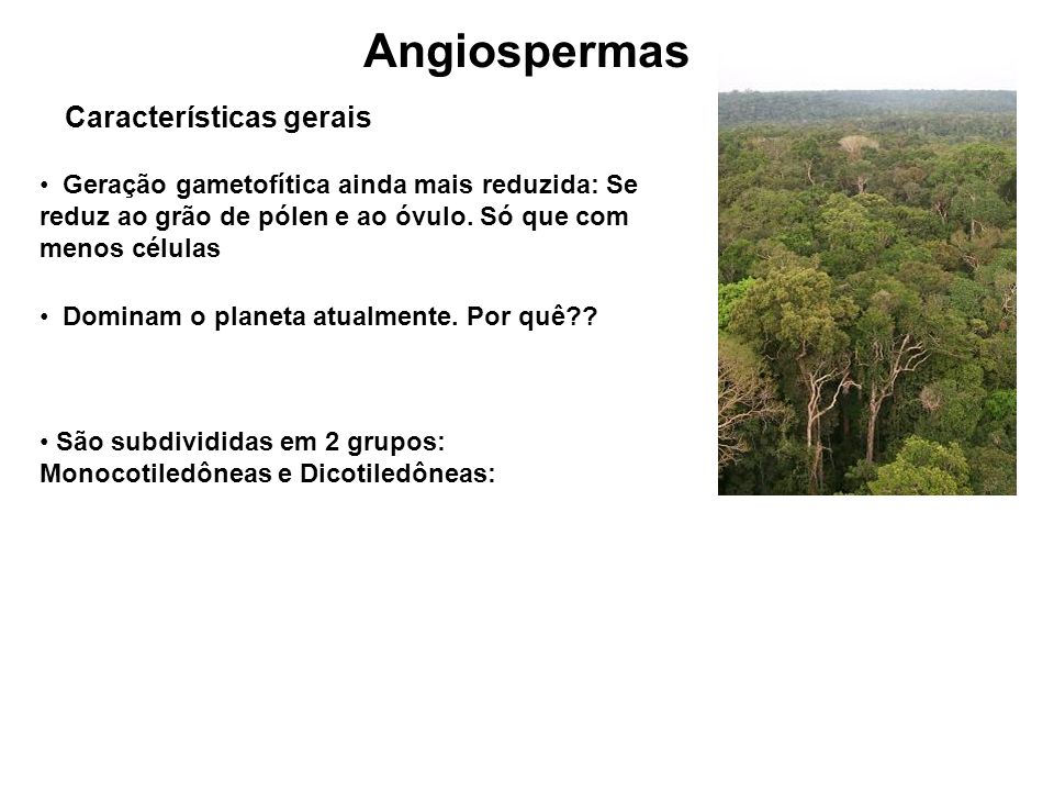 Angiospermas Características gerais