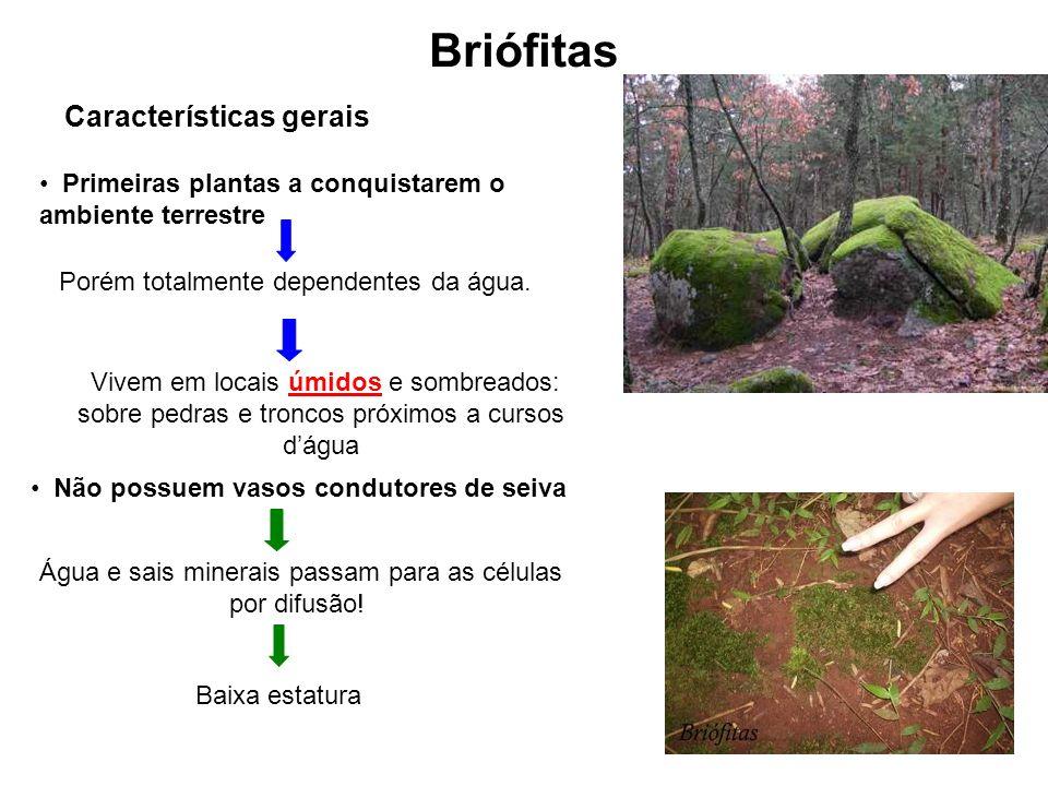 Briófitas Características gerais