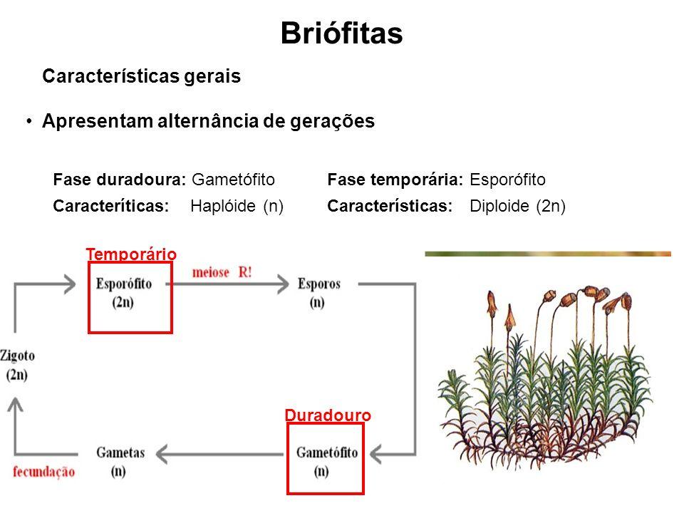 Briófitas Características gerais Apresentam alternância de gerações