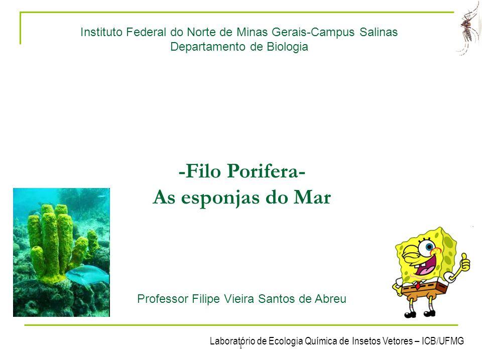 -Filo Porifera- As esponjas do Mar