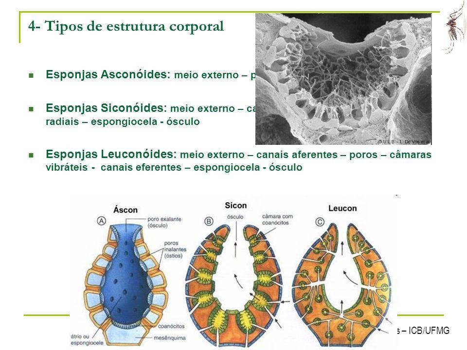 4- Tipos de estrutura corporal