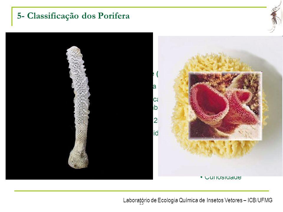 5- Classificação dos Porifera