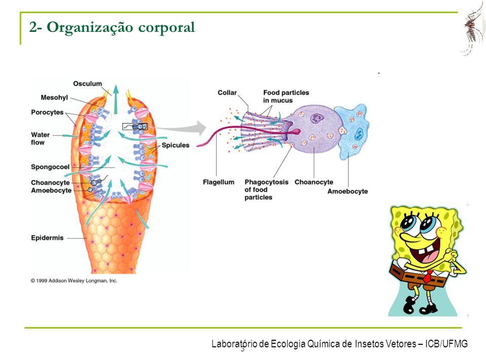 2- Organização corporal