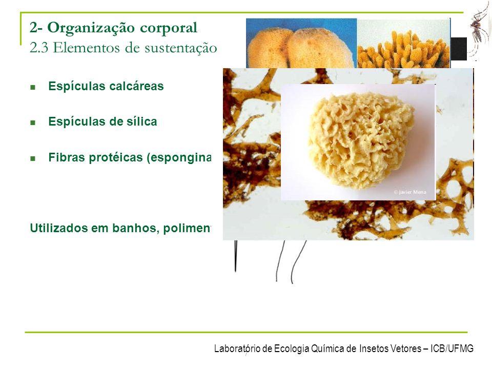 2- Organização corporal 2.3 Elementos de sustentação