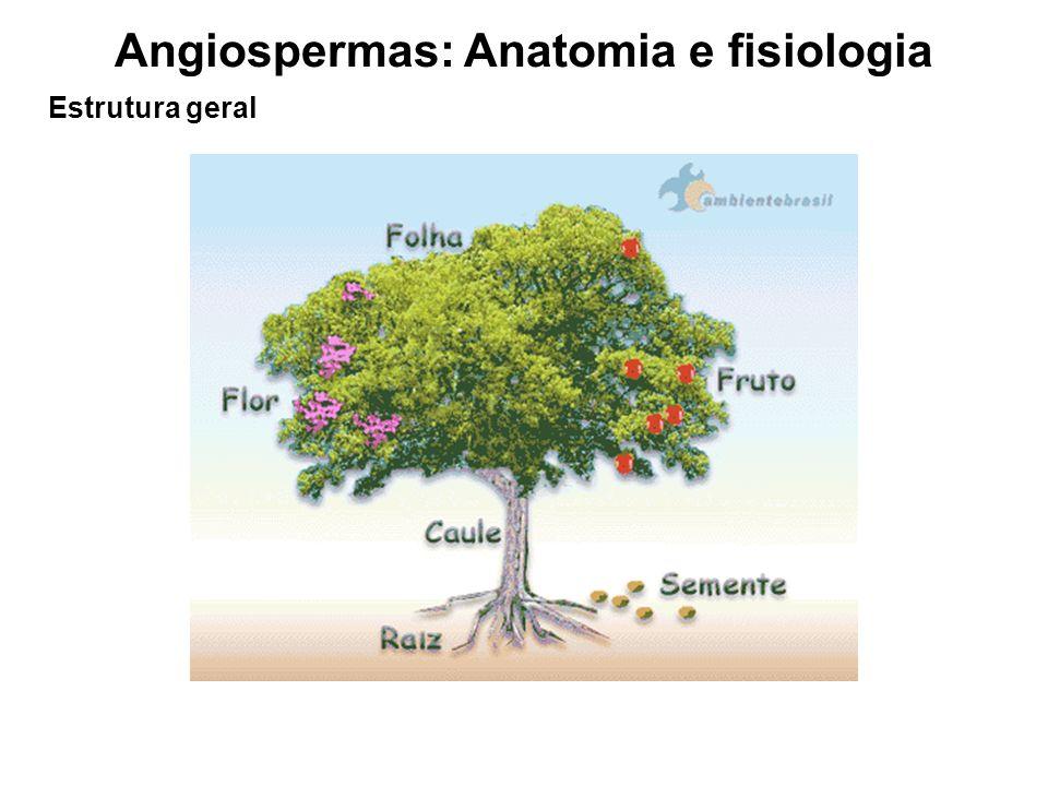 Angiospermas: Anatomia e fisiologia