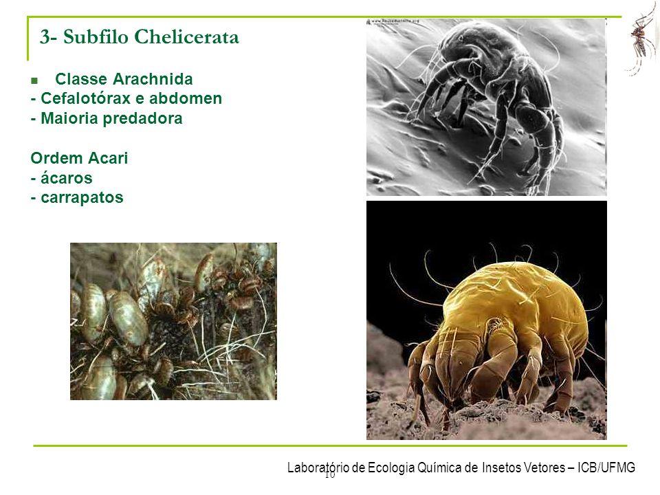 3- Subfilo Chelicerata Classe Arachnida - Cefalotórax e abdomen