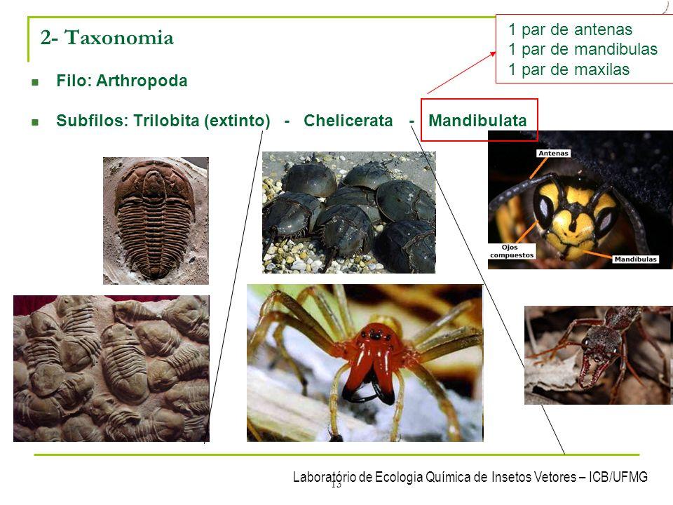 2- Taxonomia 1 par de antenas 1 par de mandibulas 1 par de maxilas