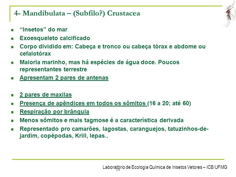 4- Mandibulata – (Subfilo ) Crustacea