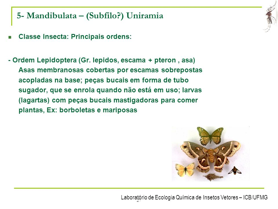 5- Mandibulata – (Subfilo ) Uniramia