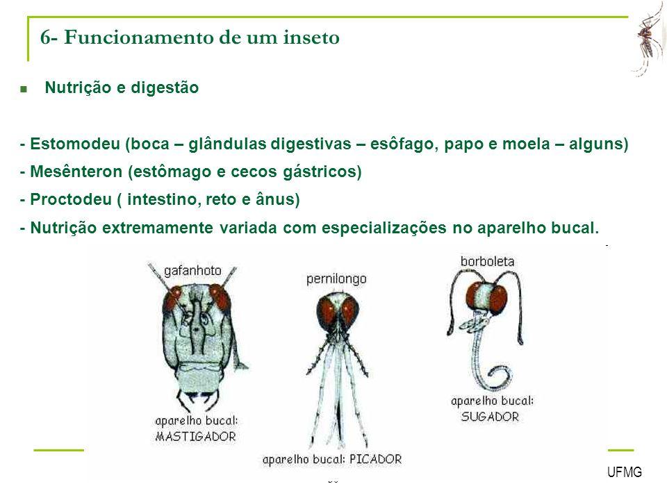 6- Funcionamento de um inseto
