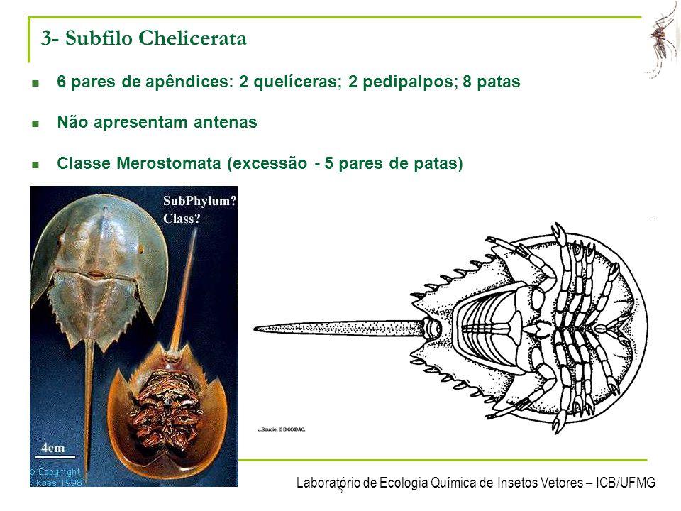 3- Subfilo Chelicerata 6 pares de apêndices: 2 quelíceras; 2 pedipalpos; 8 patas. Não apresentam antenas.