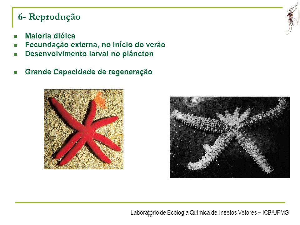 6- Reprodução Maioria dióica Fecundação externa, no início do verão