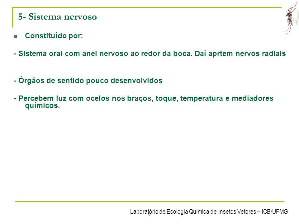 5- Sistema nervoso Constituído por: