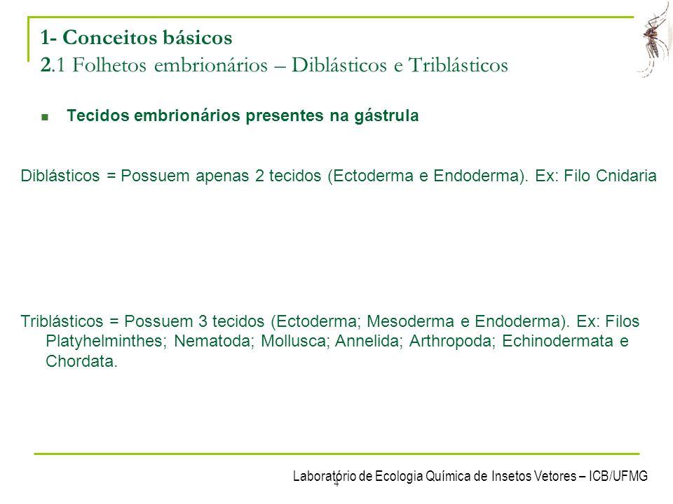 1- Conceitos básicos 2.1 Folhetos embrionários – Diblásticos e Triblásticos
