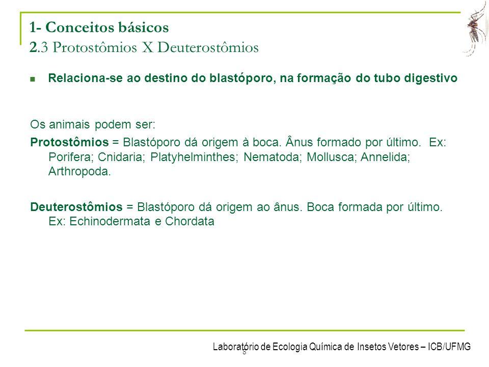 1- Conceitos básicos 2.3 Protostômios X Deuterostômios