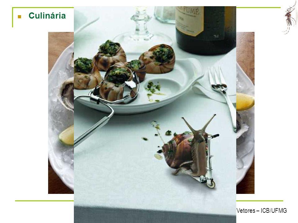 Culinária 16