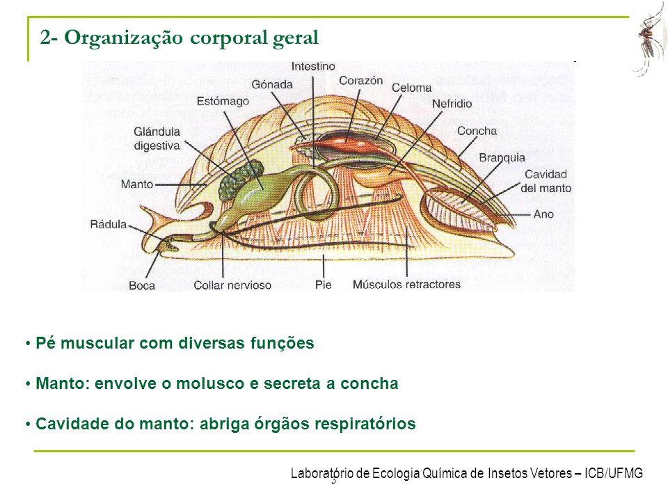 2- Organização corporal geral
