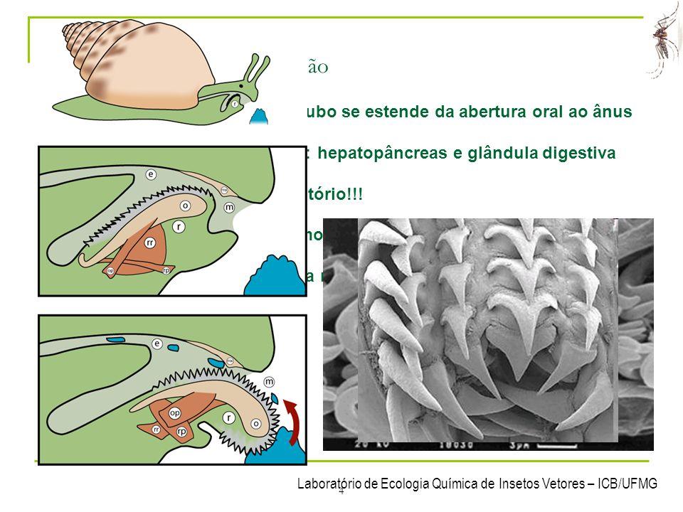 3- Sistemas dos Mollusca 3.1 Sistema digestório / nutrição