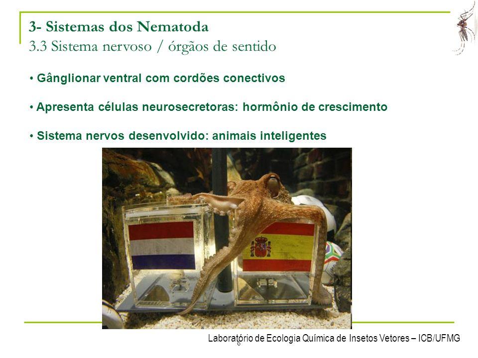 3- Sistemas dos Nematoda 3.3 Sistema nervoso / órgãos de sentido