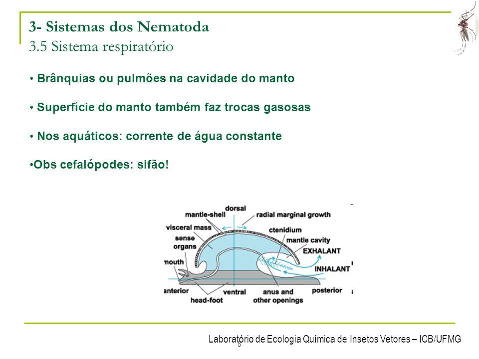 3- Sistemas dos Nematoda 3.5 Sistema respiratório
