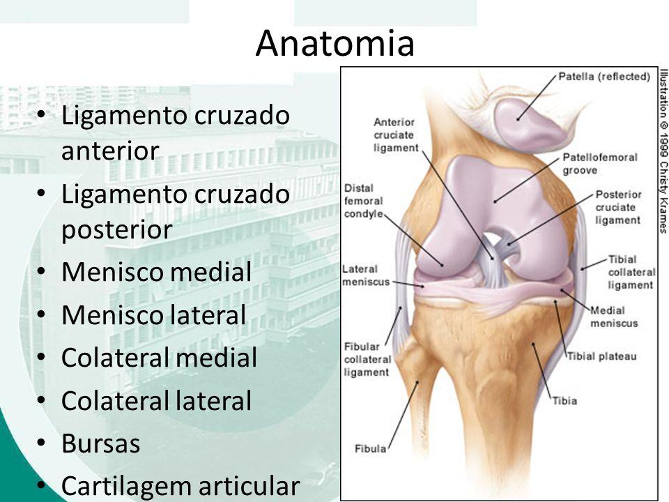 Dorable Anatomía Ligamento Cruzado Colección de Imágenes - Imágenes ...