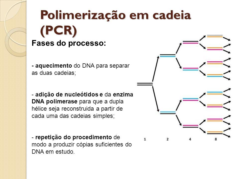 Polimerização em cadeia (PCR)
