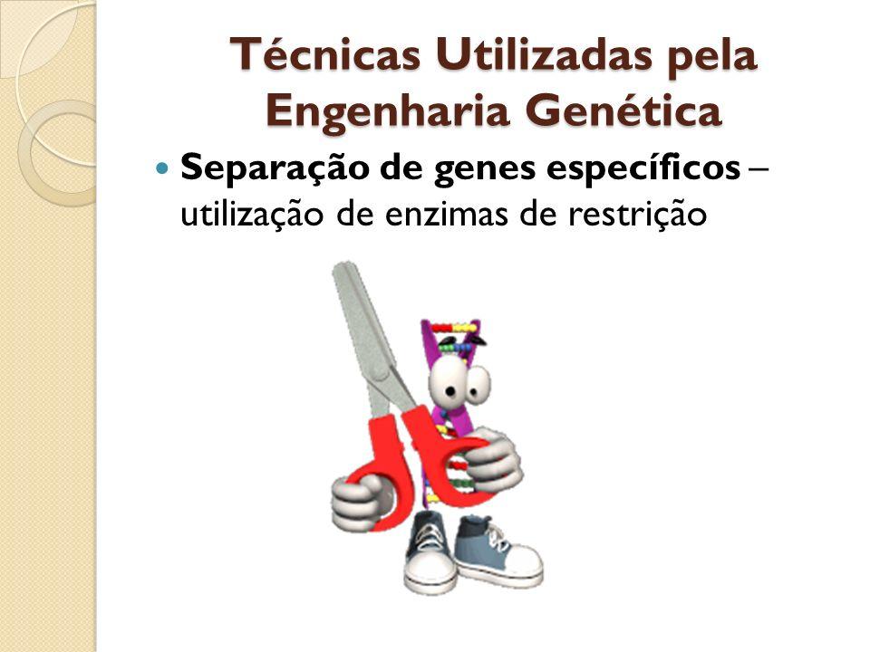 Técnicas Utilizadas pela Engenharia Genética