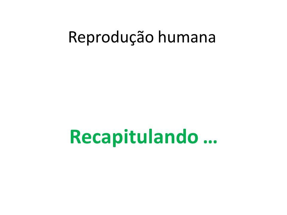 Reprodução humana Recapitulando …