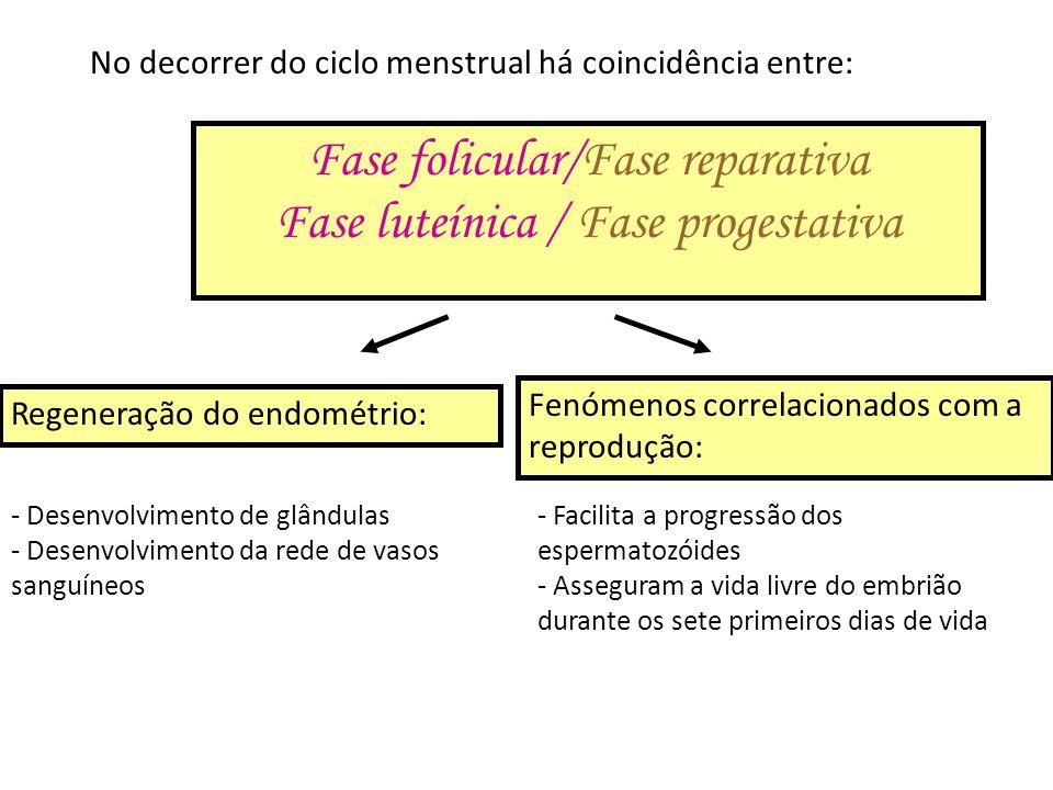 Fase folicular/Fase reparativa Fase luteínica / Fase progestativa