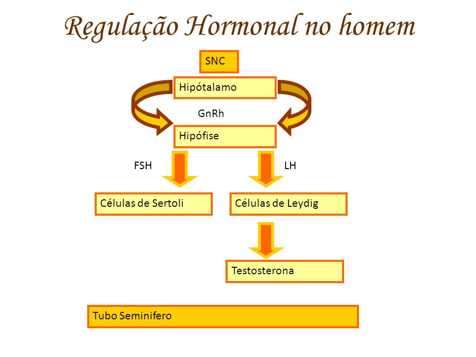 Regulação Hormonal no homem