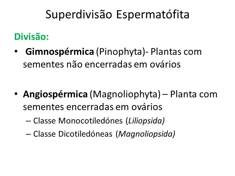 Superdivisão Espermatófita