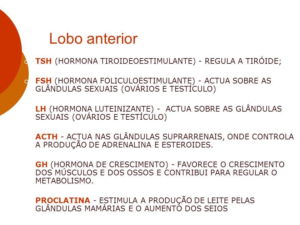 Lobo anterior TSH (HORMONA TIROIDEOESTIMULANTE) - REGULA A TIRÓIDE;