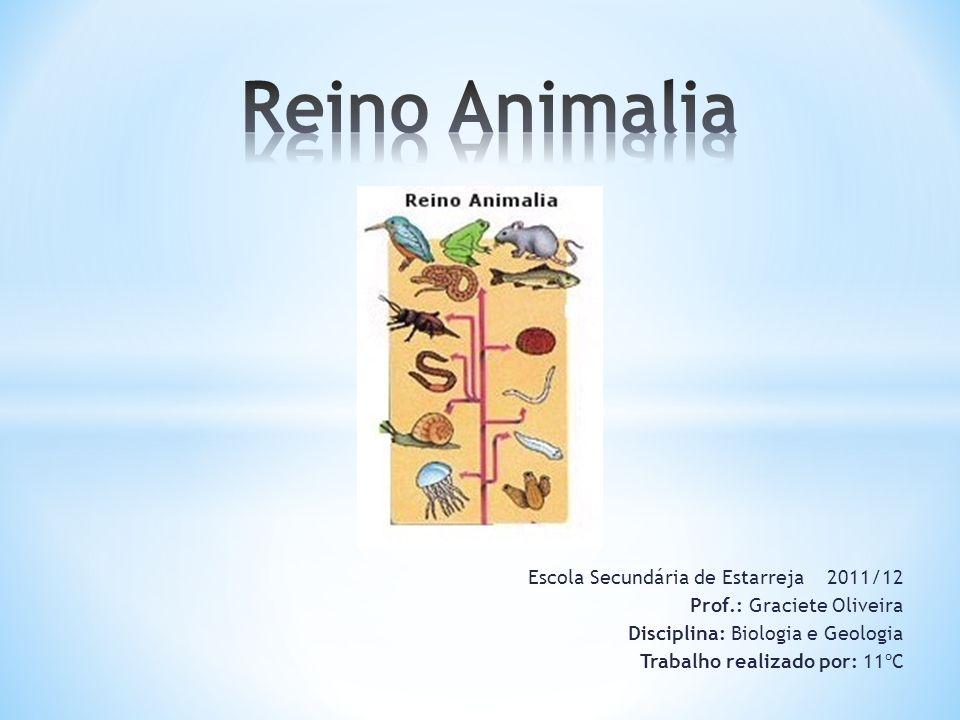 Reino Animalia Escola Secundária de Estarreja 2011/12