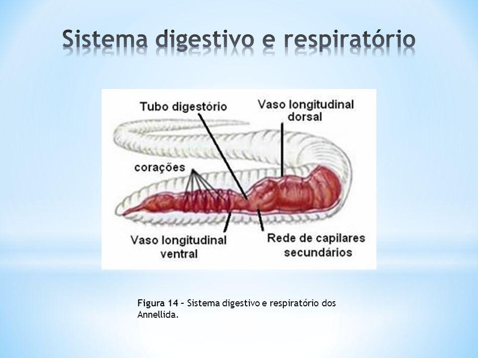 Sistema digestivo e respiratório