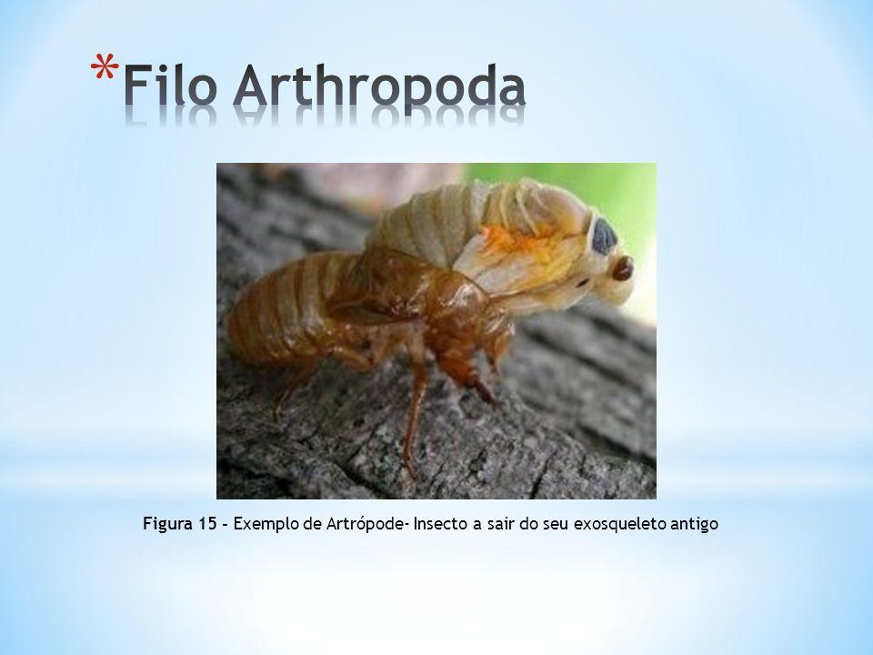 Filo Arthropoda Figura 15 - Exemplo de Artrópode- Insecto a sair do seu exosqueleto antigo