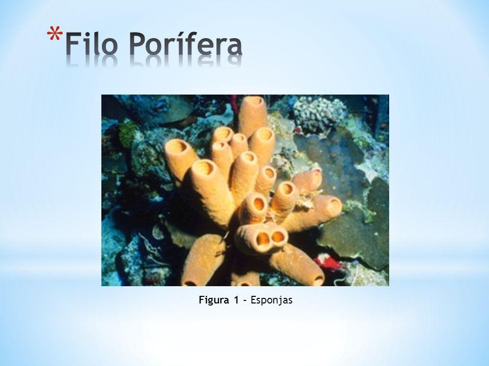 Filo Porífera Figura 1 - Esponjas