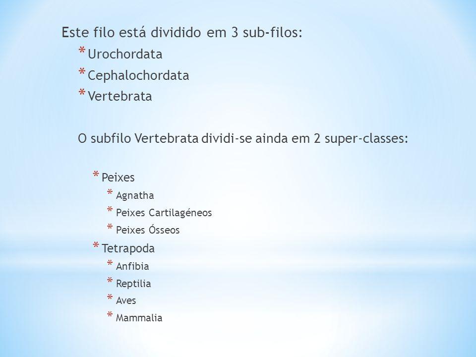 Este filo está dividido em 3 sub-filos: