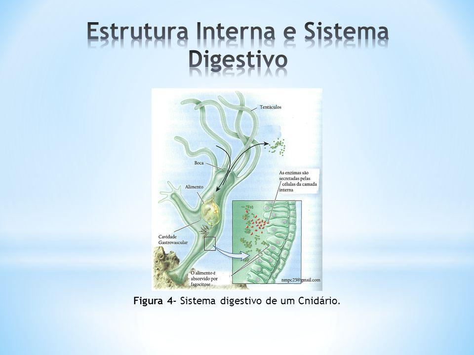 Estrutura Interna e Sistema Digestivo