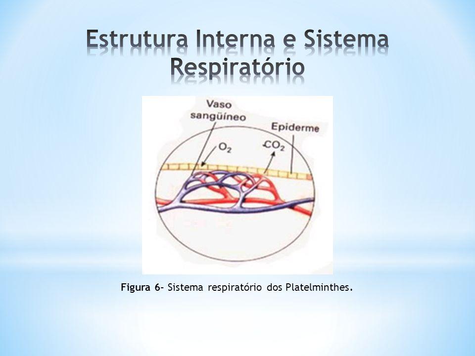 Estrutura Interna e Sistema Respiratório