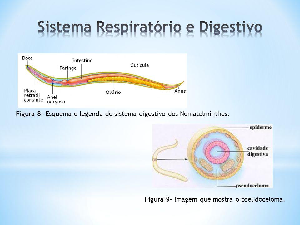 Sistema Respiratório e Digestivo